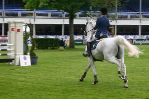 Show Jumping Stock 015 by LuDa-Stock