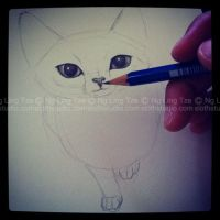 cat drawing practice (01) by tamaow