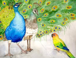 Parrot and Peacocks by greencheek