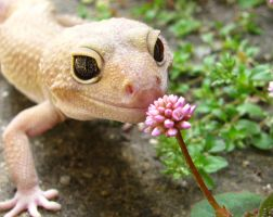 stop and smell the flowers by deinte