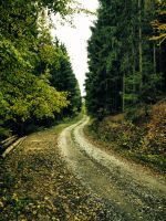 Forest road by FrantisekSpurny