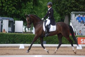 Horse Stock by DalRiataStables