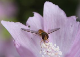 hover fly2 by tap69