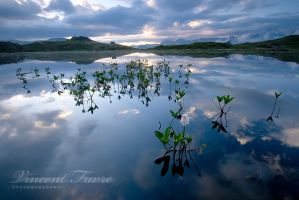 The Miror by vincentfavre