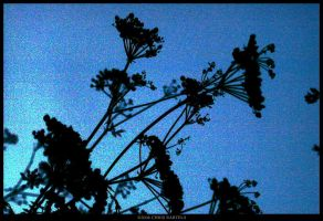 Weed Silhouette by Zaleucus