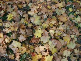 autumn leaves 1 by indeed-stock