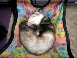 Skittles the Ferret by Emil-i