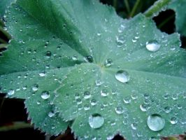 raindroplets by Camille-Sophie