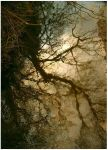 Tree Reflections by Forestina-Fotos
