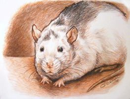 Silver the Roan Rat by greyviolett