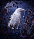 The white Raven by Fae-Melie-Melusine