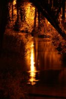 Golden Nights by webcruiser