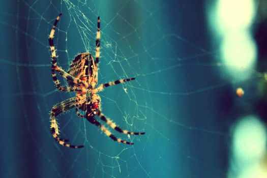 Spider On Blue by Poof2507