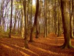 Autumn Forest by Angie-Pictures