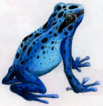 Poison Dart Frog by Moonstar10