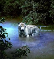 Misty Morning Tiger by mandys-creations