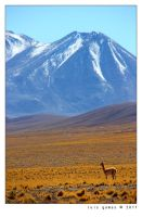 Vicuna by gomes