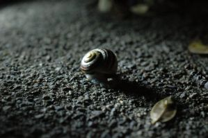 Snail 5 by tower015