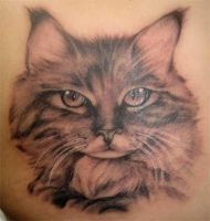 Srdjan tattoo - cat portrait by srdjantattoo