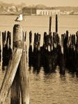Old Harbor by eastwest
