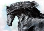 Friesian Horse at Black by ElenaShved