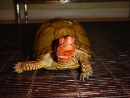 Turtle 2 by animalstock
