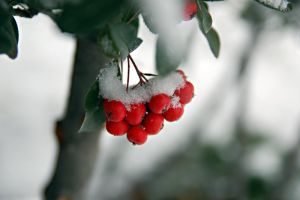 snowflakes with red by gungorayca