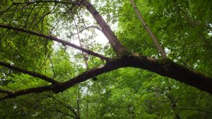 tree branch by moslem-d