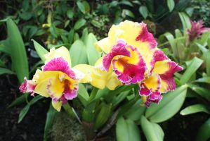 Orchid 2 by miss-masami