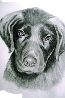 My 1st realism dog :D by AkatsukiFan1