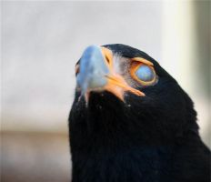 Bird, Possessed. by FSGPhotography