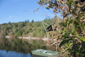 Berry on the lake of Mervent by Riboulbo