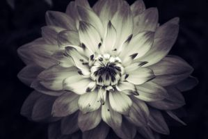 Between Like And Love by ArrowLass