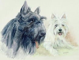 Scottie and Westie by morgansartworld