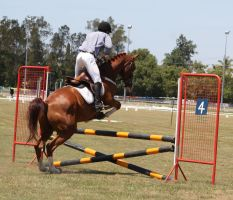 STOCK Showjumping 408 by aussiegal7