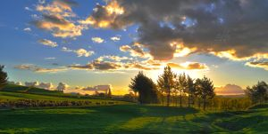 Sunset cows by andreicd