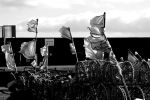 Flags In The Wind 541 by lichtie