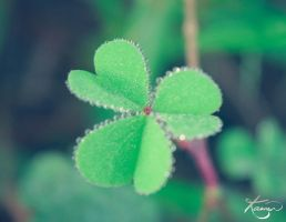 Clover by KamenGregorich