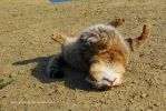 cat rolling around by Mari-Ghostly