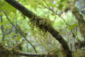 Moss 4 by wolfstockphotos