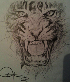 Easy drawings of tigers face