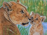 Lioness and  cub, pastels by Sarahharas07