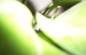 Green close-up plant by hatedDREAMER