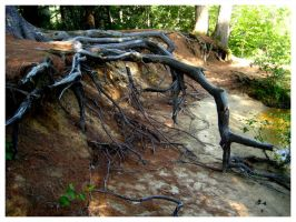 Roots Exposed I by Fallensbane