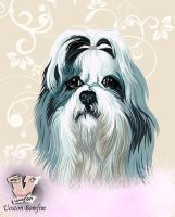 ShihTzu by uoston
