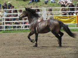 Rodeo Horse Stock 5 by horsecrazycool