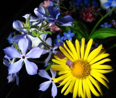 Flowers by 8magda