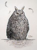 Owl 02 by XThrill