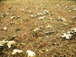 Leaves on the Ground 2 by DevilWillPay10