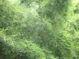 Bamboo leaves by shafin